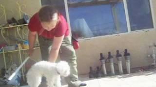 The Pheobie Movie Dog Training thumbnail