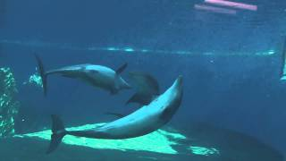 OMG Gay Dolphins.m2ts