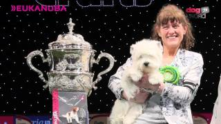 Crufts 2016 Best in Show - Devon and Marie Burns Interview - West Highland White Terrier