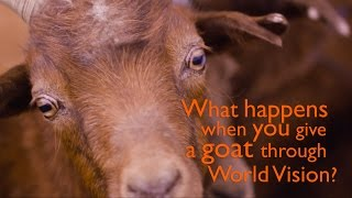Journey of a Goat | World Vision