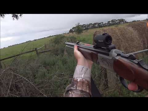 2017 Ultimate Dachshunds And Blaser Hunting Compilation