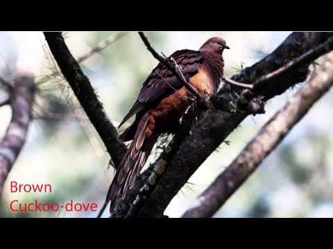 Aussie birds and their calls