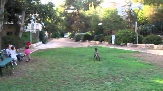 Israeli Dog Trainer On Trick Theory