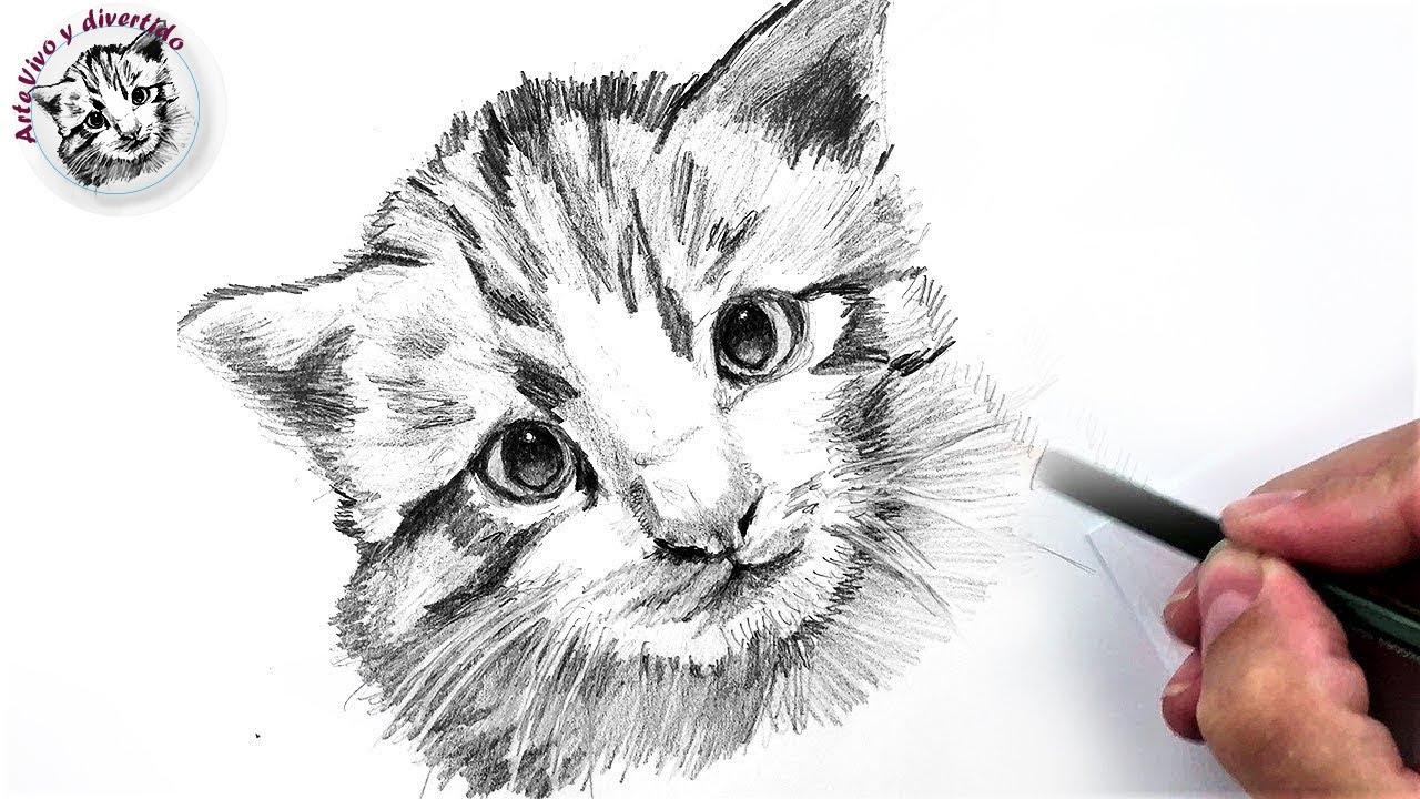Cómo Dibujar un Gato Pequeño a Lápiz Fácil, Paso a Paso