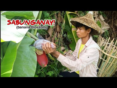 Download FINDING AND COOKING SOME BANANA BLOSSOMS | Life in the Countryside | Episode 19