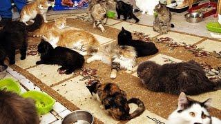Кошки.Трогательный ролик о кошках,которым нужен дом. г.Новосибирск