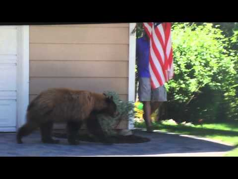 Image result for Watch What Happen When Man And Bear Spot Each Other [VIDEO]