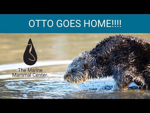 Otto Goes Home!