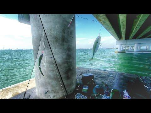 Memancing Cencaru di BAWAH Jambatan Pulau Pinang | Ultralight Fishing