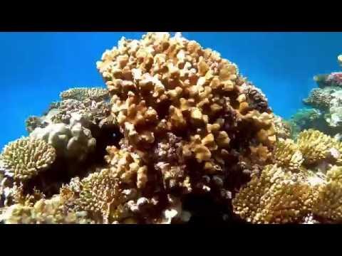 The Three Corners Fayrouz Plaza Beach Resort - The House reef 2016 - Filmed with SJCAM SJ5000x Elite streaming vf