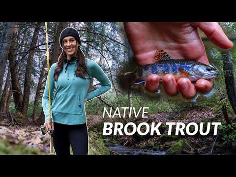 Our SECRET Fishing Honey Hole *WILD Brook Trout*