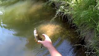 Рыбалка в проводку на кузнечика. Вот что сейчас нужно голавлю!