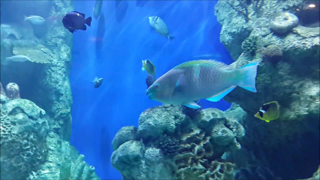 Fish aquarium karachi - Fakieh Aquarium Jeddah