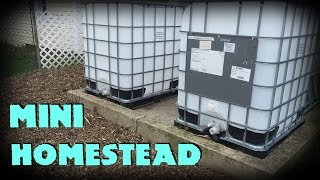 Our journey into Homesteading part 2: Mini Homestead