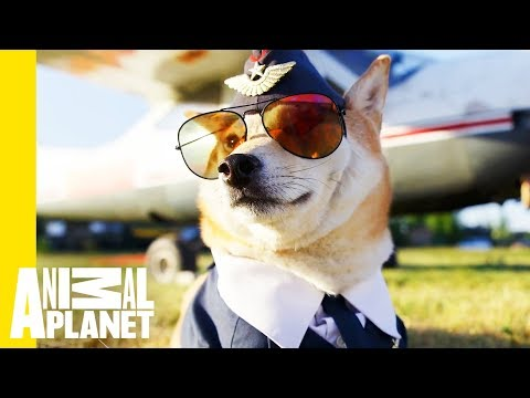 Pet Passengers: Traveling with Your Furry Friends