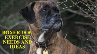Boxer Dog Daily Exercise [Needs and Ideas]