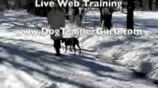 How To Train Your Dog To Stay Online Dog Training Private Lessons