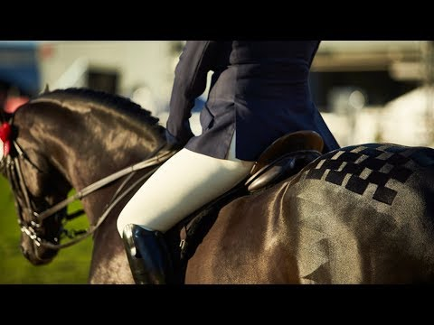 Champion Saddle Galloway - 2017 Royal Melbourne Show Horses in Action