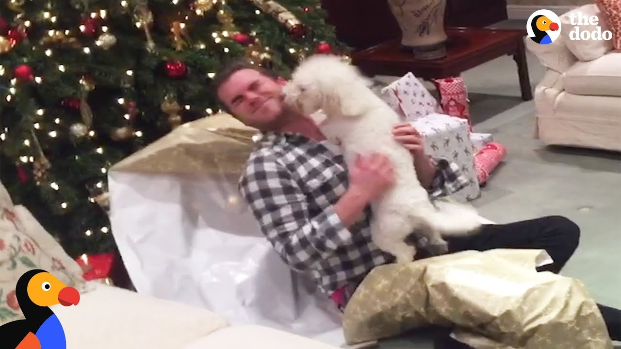 Good Dogs Opening Christmas Presents