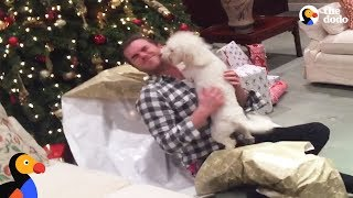 Good Dogs Opening Christmas Presents   The Dodo