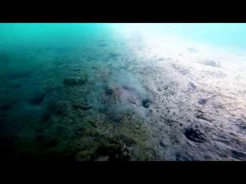 Octopus Jet Propulsion