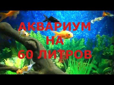 Аквариум на  60 л. / Его обитатели /Aquarium 60l.