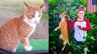 Weterynarz zabija kota jednym strzałem z łuku