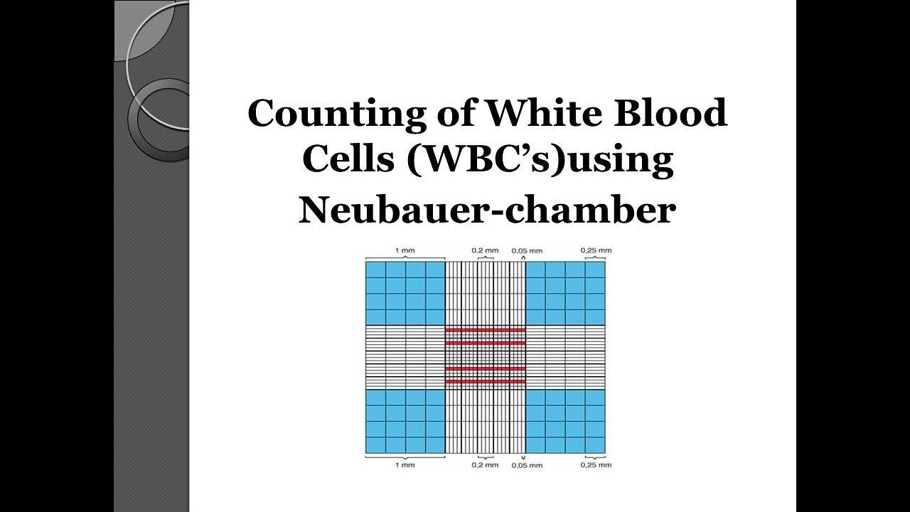 Study of neubauer's chamber ppt video online download.