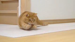 ドリフト猫