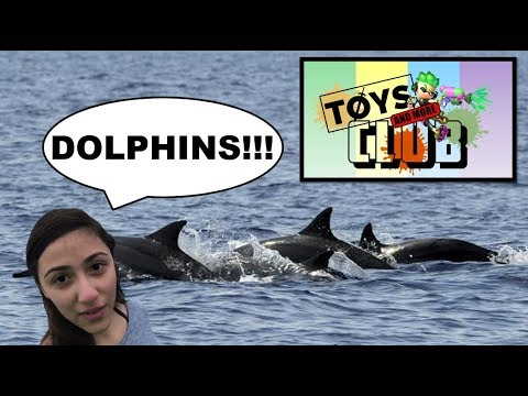 Dolphins!!! - Toys And More Club Live  - Panama City Beach