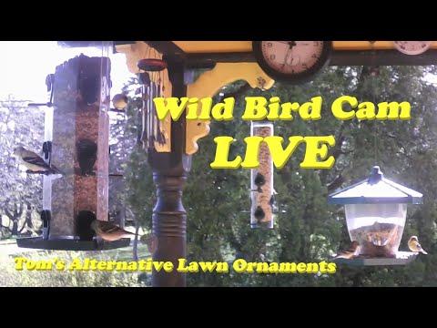 Wild Bird Cam LIVE (07/04/20)
