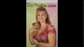 Star Yorkie Kennel Los Angeles California Puppies For Sale Family Album