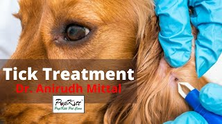 Flea and Tick treatment for dogs - By Dr. Anirudh Mittal | 100% Results | @Pupkitt Pet Care