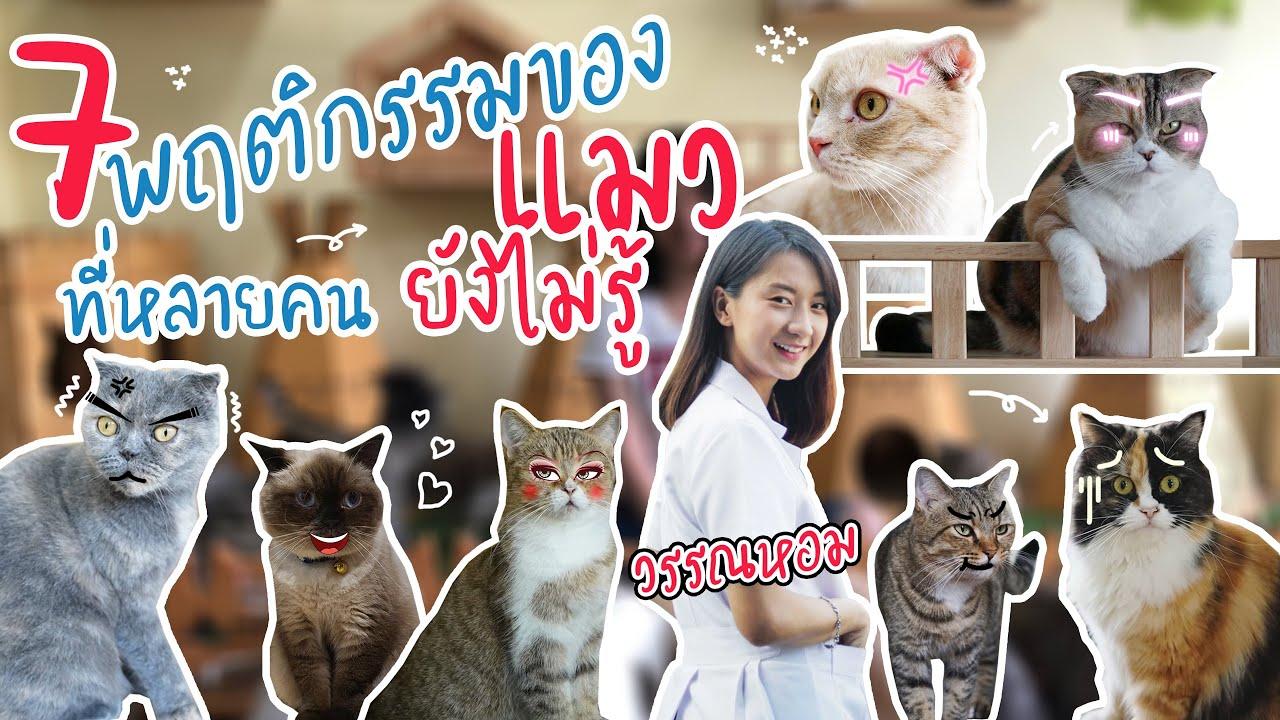 7 พฤติกรรมของแมว ที่หลายคนยังไม่รู้ - หมอแมวน่ารัก