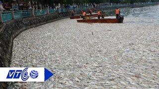 'Sâu xa' vụ cá chết bất thường trắng Hồ Tây | VTC