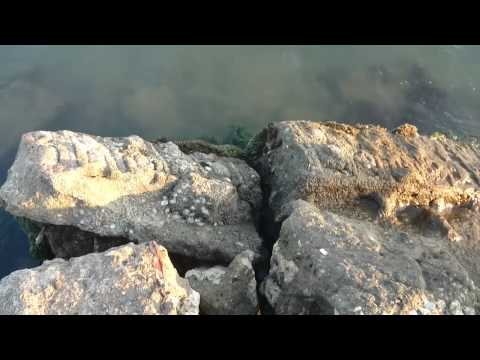 Playa Berruga - San Onofre Sucre