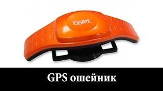 GPS ошейник