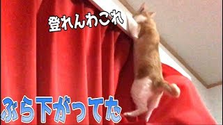 猫はとても不思議な生き物ですよね。本能のまま動くんですけどそこそこ...