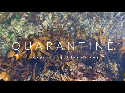 Quarantine - Rock-pooling During Lockdown