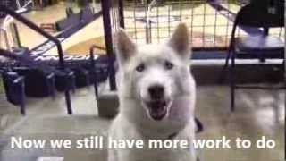 "NATSC Video Contest 2014: ""UCONN"""