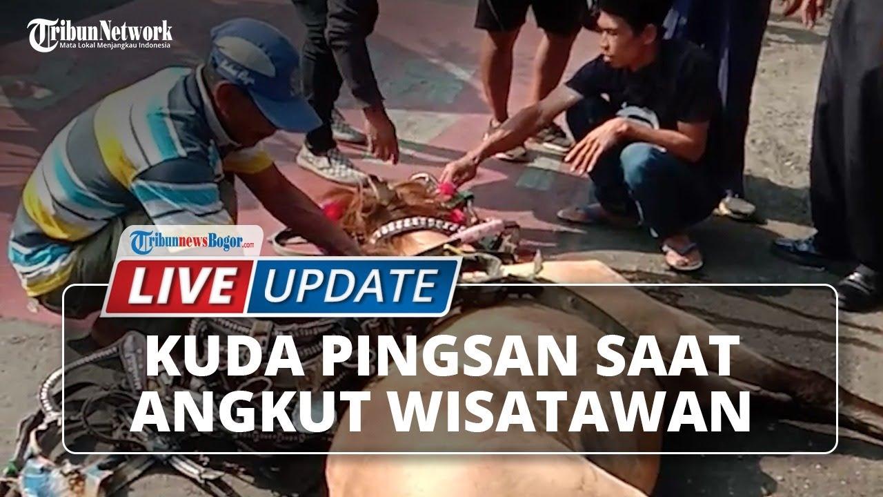 🔴 LIVE UPDATE: Kuda Pingsan saat Tarik Kereta Wisatawan di Depan Balaikota Bogor