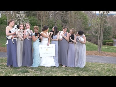 Thumbnail: Why This Bridal Party Used Orphaned Puppies Instead of Bouquets