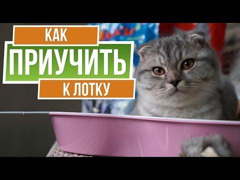 Как приучить кошку к лотку ✔️ Советы от garden zoo