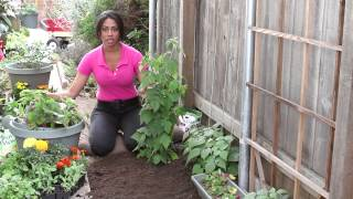 How to Water Raspberries : The Chef's Garden