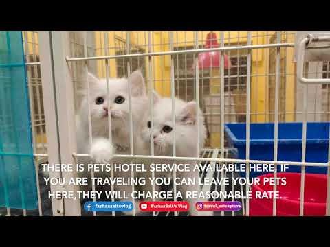 Pet Shop Tour / Pet Grooming / Qatar Pets / Vlog #028