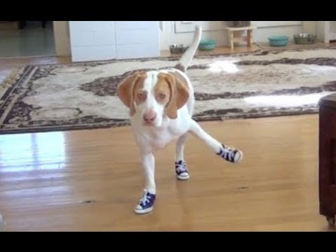 Funny Dogs in Boots 2014  NEW HD  - YouTube f472afcfe0f6