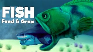 Giant Goliath Grouper Eats Great White Shark! - Feed and Grow Fish Gameplay - Goliath Update