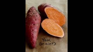 Y | בטטות - Yam's B | (Prod. By Ninja4:20)