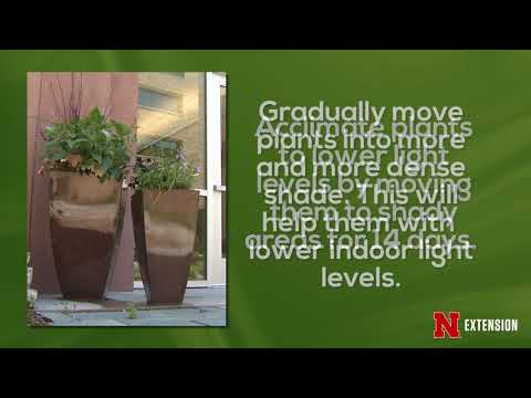 Moving Plants Indoors