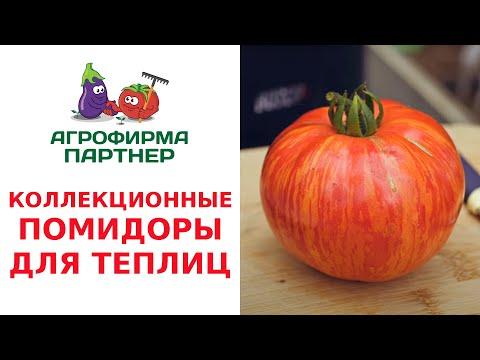КОЛЛЕКЦИОННЫЕ ПОМИДОРЫ ДЛЯ ТЕПЛИЦ | коллекционные | выращивание | урожайный | помидоры | урожайн | томатов | помидор | урожай | томаты | семена
